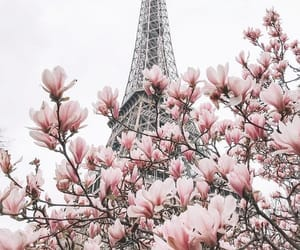 beautiful, photography, and beauty image