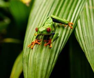 frog, rana, and animal image