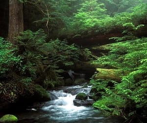 forest, river, and nature image