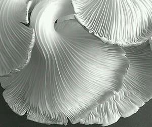 black, macro, and white image