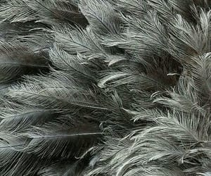 feathers, grey aesthetic, and colour aesthetics image