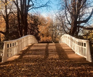 bridge, clouds, and fall image