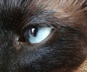 blue, cat, and cateye image