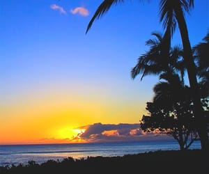 beauty, nature, and palms image