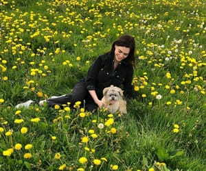 dandelions, dogs, and charli howard image