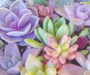 cactus, flowers, and pastel color image