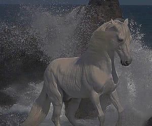 animals, grace, and stunning image