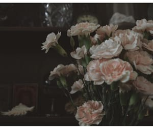 bouquet, carnations, and dark image