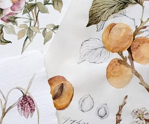 apricot, art, and flower image