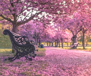 europe, nature, and pink image