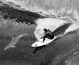 surf and life image