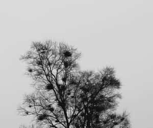 arbol, blanco y negro, and wallpapers image