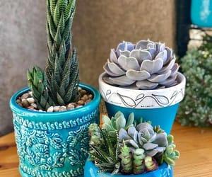 cactus, plant, and planta image