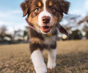 dog, puppy, and doggy image