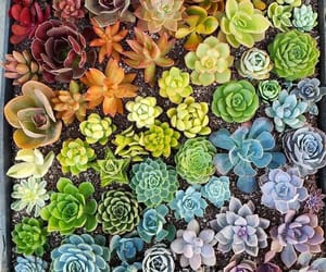 colourful, plants, and rainbow image