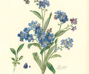 botanical, forget me not, and flowers image