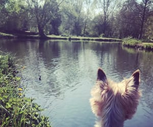 dog, nature, and lové image