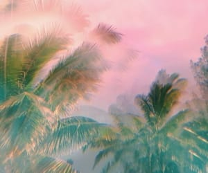 palm trees, pink, and tree image
