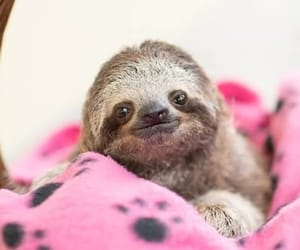 nature, picture, and sloth image