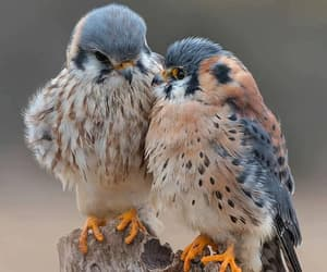 birds, nature, and animals image