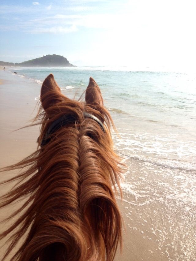 article, horse riding, and sport image
