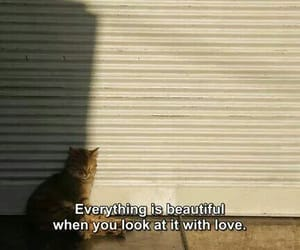 cat, quotes, and love image