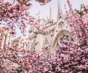 bloom, france, and Notre Dame de Paris image
