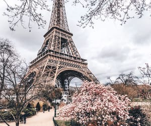 paris, france, and roses image