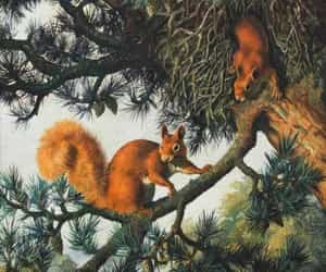 forest, painting, and squirrel image