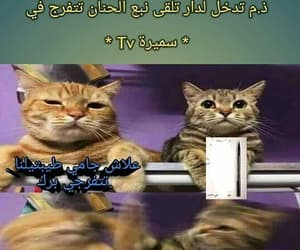 Algeria, dz, and funny image