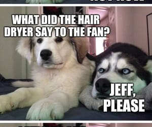 fan, hairdryer, and comic dog image