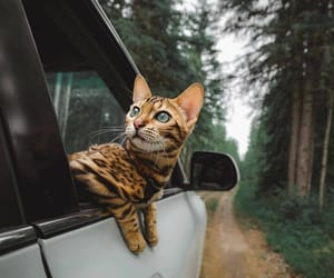 cat, forest, and animal image