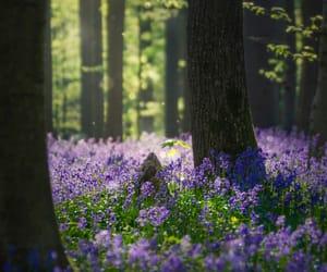 bluebells, woodland, and my upload image