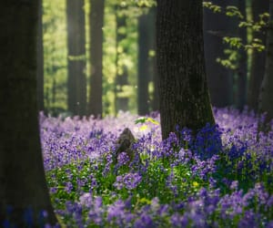 bluebells, enchanted forest, and faerie image