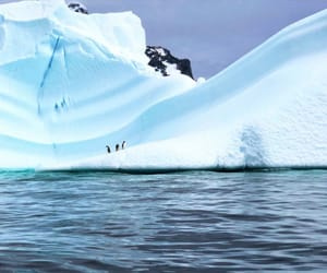 Antarctic, family, and penguin image