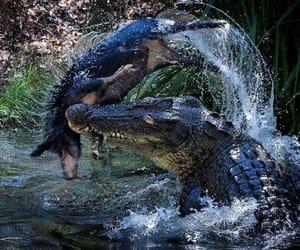 agua, comida, and Animales image