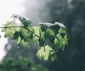 rain, leaves, and nature image