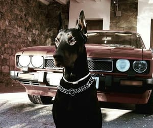 dog, black, and car image