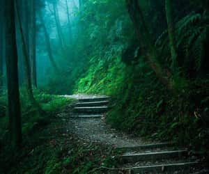 exteriores, forest, and paisajes image