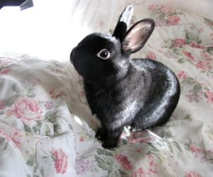 cute, black, and bunny image