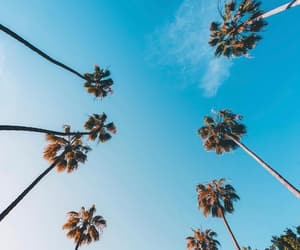 california, los angeles, and palm trees image