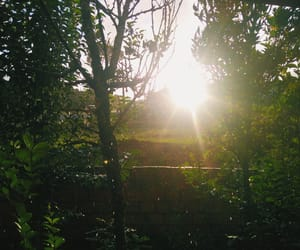 aesthetic, forest, and sun image