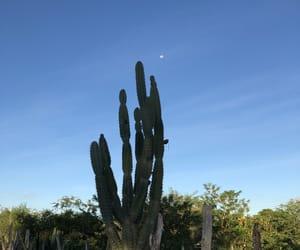gratitude, lua, and nature image