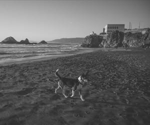 beach, california, and dog image