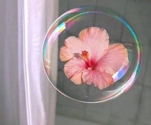 pink, bubble, and flower image