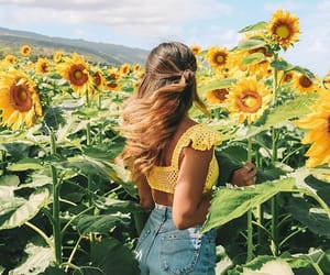 sunflower, flowers, and fashion image