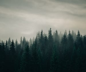 evening, forest, and pine image
