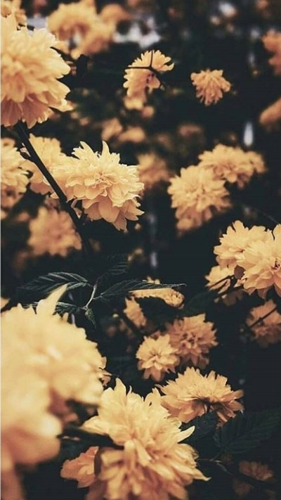 cute vintage retro yellow flower background on we heart it cute vintage retro yellow flower