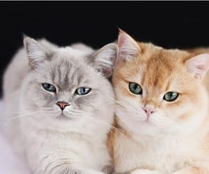 blue eyes, cats, and green eyes image