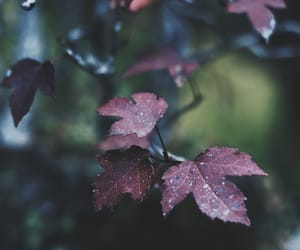autumn, nature photography, and rain image